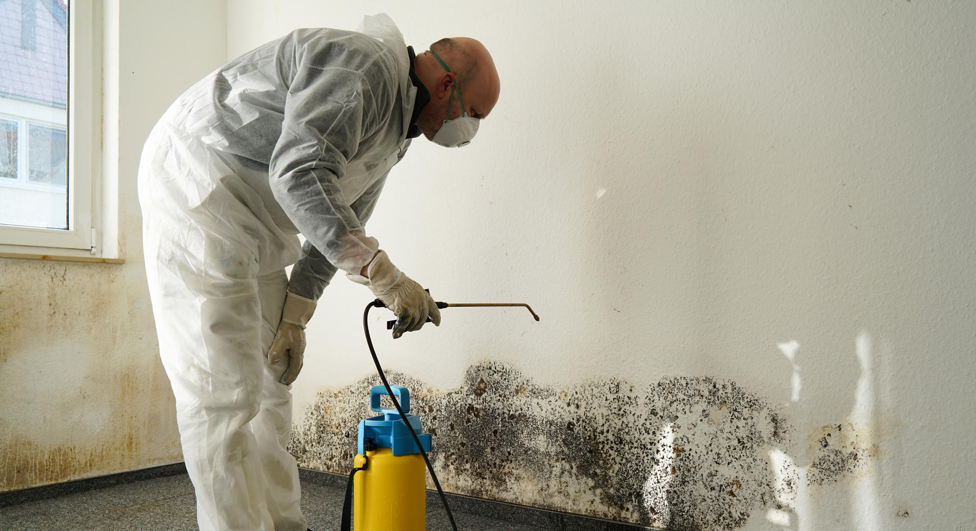 Mold Remediation Natural