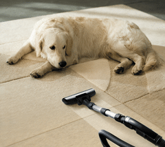 MD CARPET CLEANING